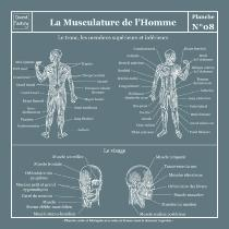 Planche Scolaire Murale - Anatomie - Musculature Humaine